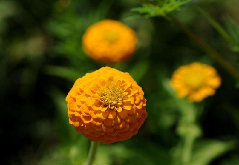 Prairie fleuri et massif vivaces sud paysage service