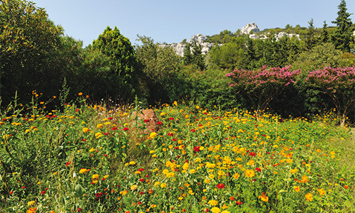 Création et réaménagement de jardin